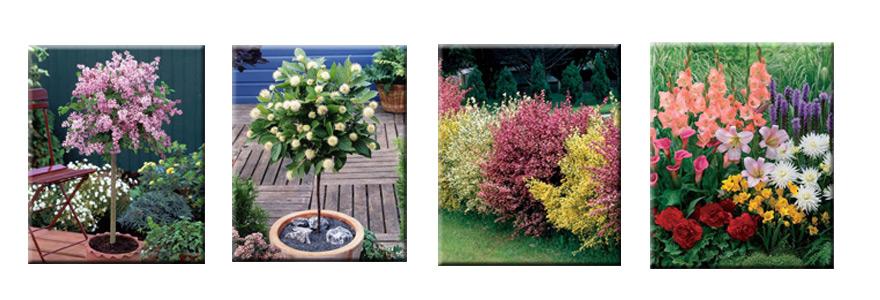 jardin personnalise