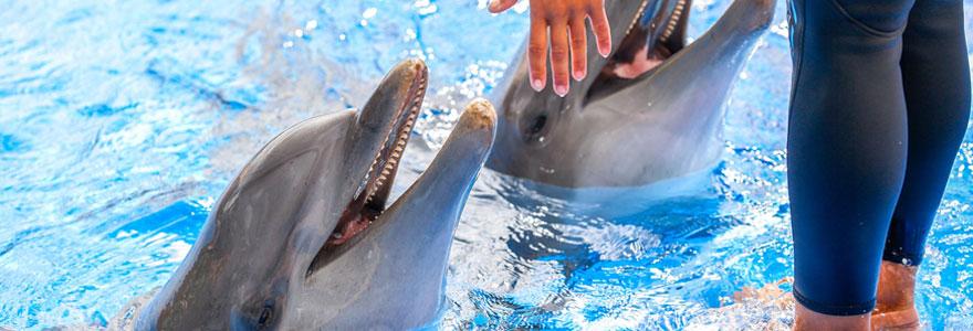 Rencontrer les animaux marins à Marineland